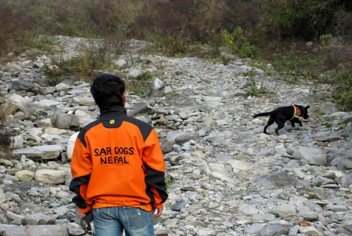 Weekly SAR Dogs Training